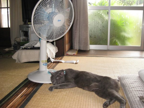 扇風機の足元で寝る灰色猫