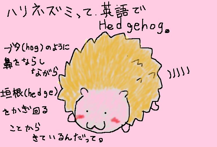 ハリネズミ(hedgehog)の名前の由来のイラスト