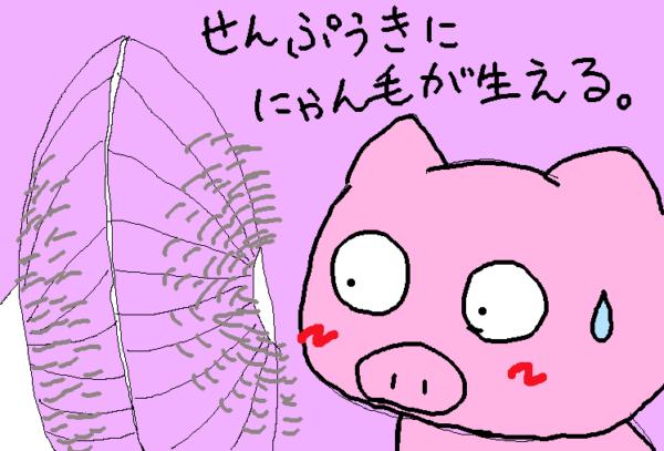 扇風機から猫の毛が生える現象