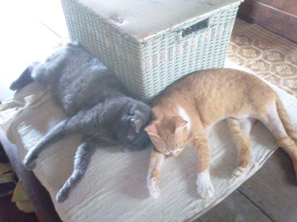 猫テトリスっぽい画像その2