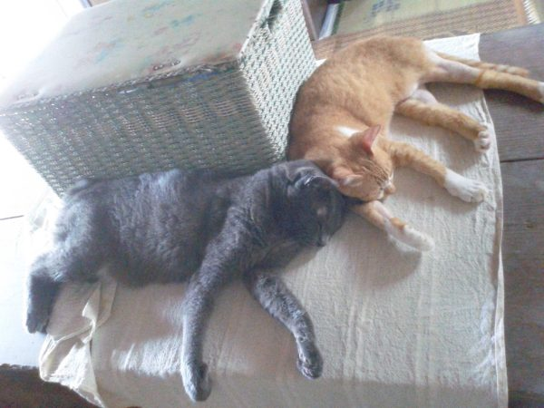 猫テトリスっぽい画像