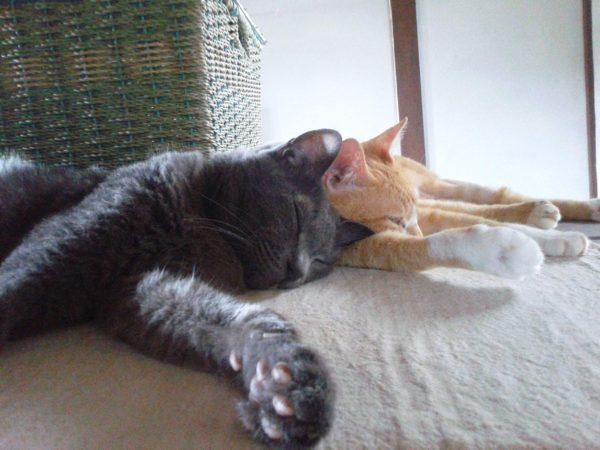 灰色猫の肉球