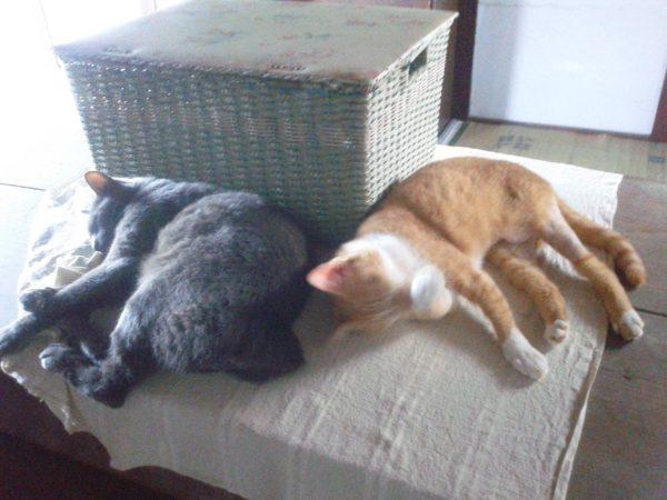 猫テトリスっぽい画像その3
