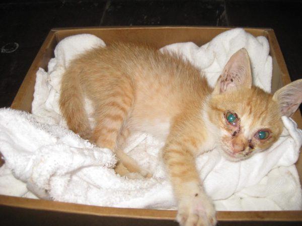 保護した直後の迷い子ネコの画像