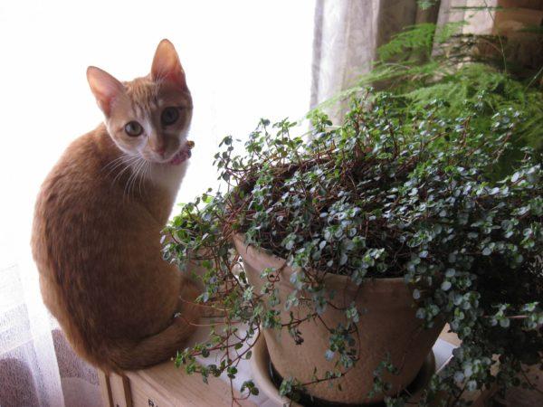 観葉植物と一緒の黄色猫の画像