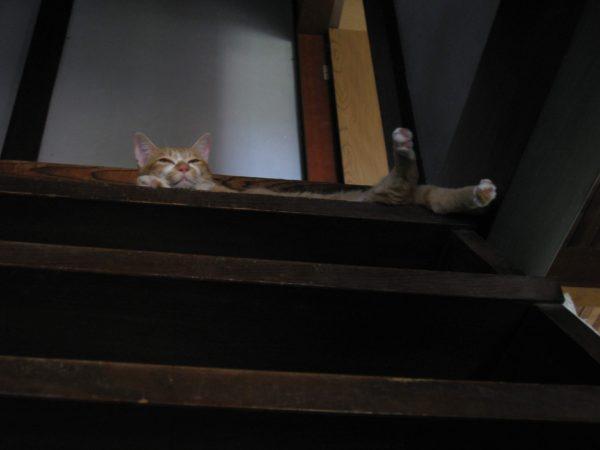 古民家の階段の上から人間を蔑む黄色猫の画像