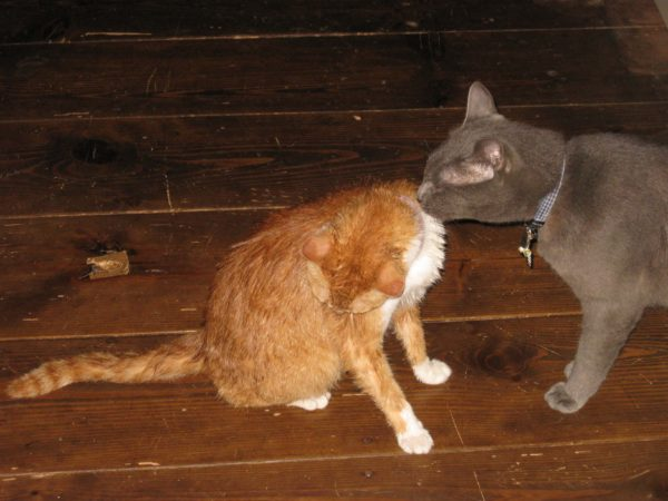 黄色猫の毛づくろいしてあげる灰色猫