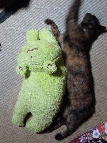 カエルと寄り添うさび猫の画像