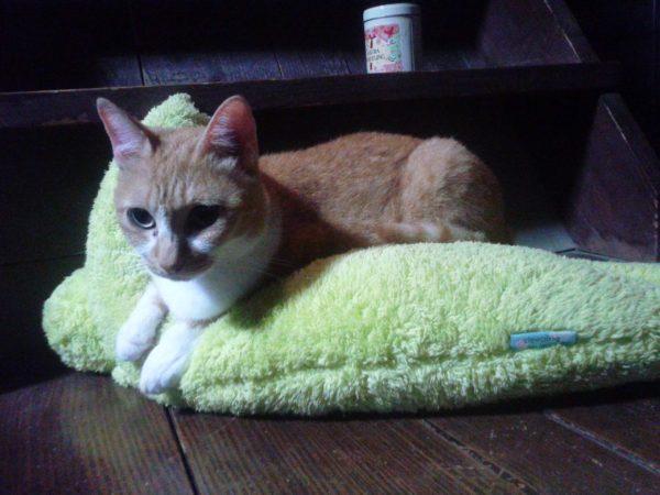 カエルに甘える黄色猫