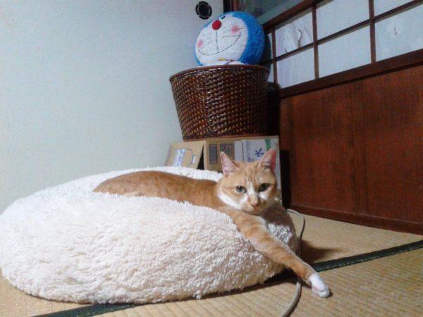 へんな恰好でくつろぐ黄色猫その3
