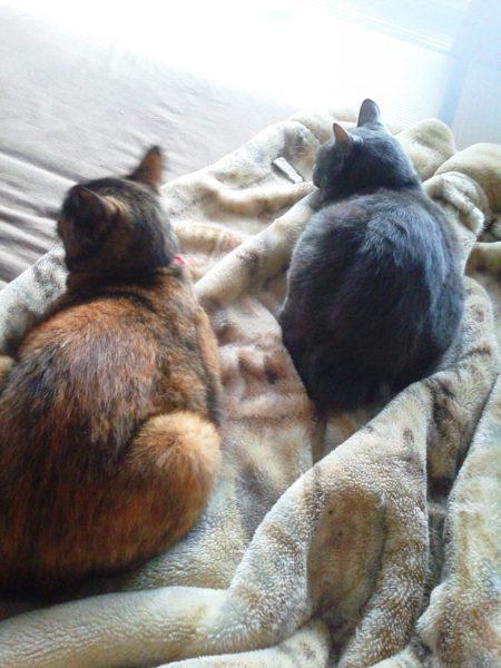 灰色猫と寄り添うさび猫