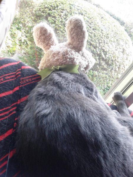 ウサギの被り物した灰色猫にゃんも