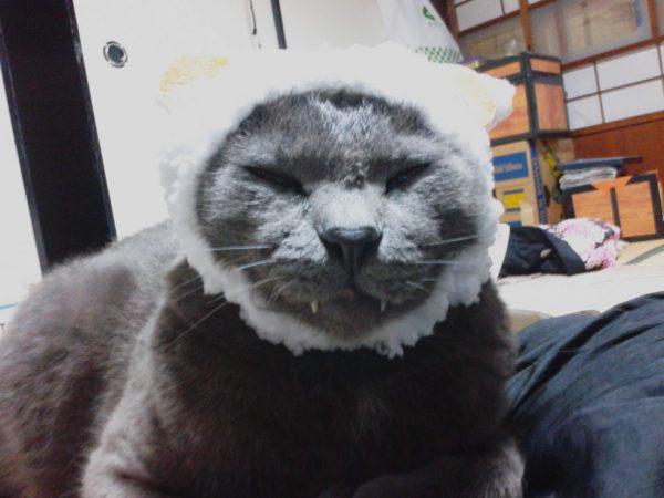 ひつじの被り物した灰色猫にゃんも