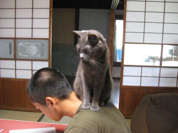 父ちゃんの肩にのる灰色猫
