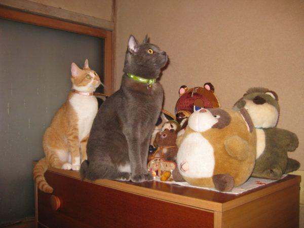 タヌキに囲まれて、電球の周りを飛ぶ虫に興味津々の灰色猫と黄色猫