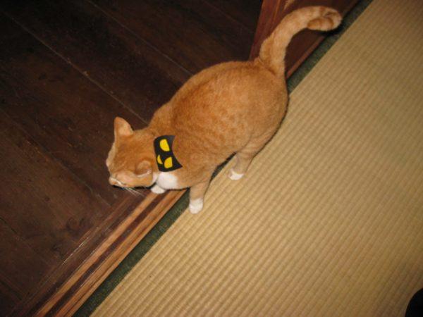 黒猫のマスクを被った黄色猫