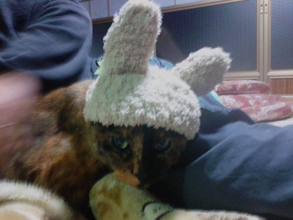 うさぎの仮装したさび猫おしめ