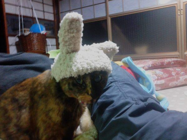 うさぎの仮装したさび猫しめじ