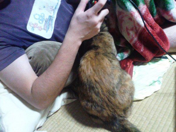 父ちゃん大好きなさび猫しめじ