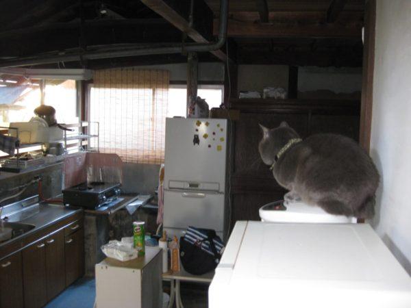 古民家の台所でポットに乗ってお尻を暖める妖怪、灰色猫ししゃも