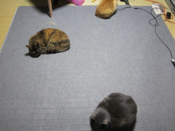 ホットカーペットで思い思いの場所に陣取る3匹の猫