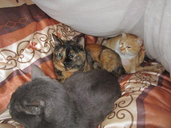 寒くなって普段仲良くないのにくっついてる猫たち