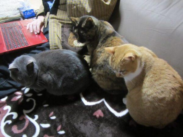 有名RPGみたいになっている3匹の猫