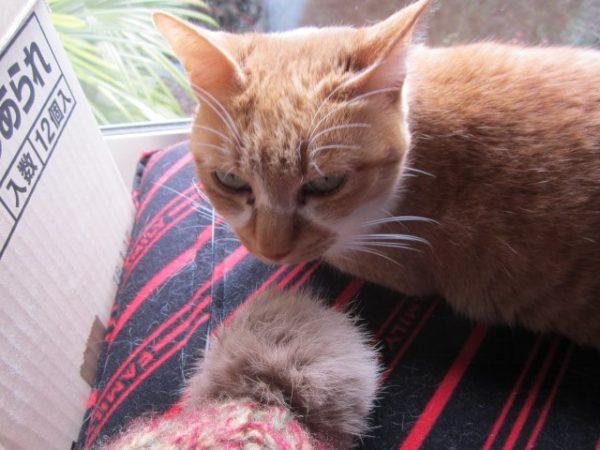 お気に入りの帽子のモフモフを猫に舐められてショックなこと