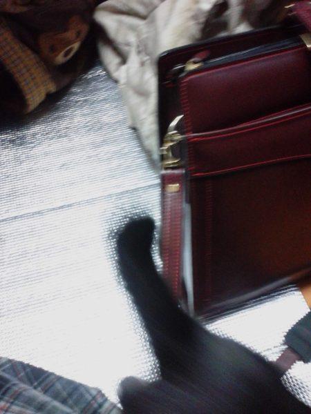 くつした子猫成長日記、ふすまをぶち破る元気っぷり
