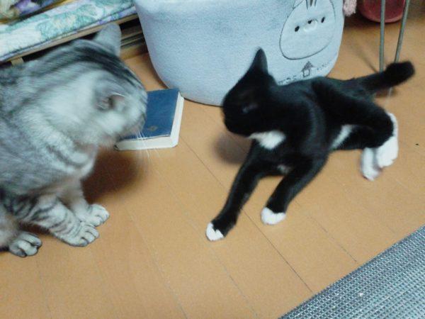 猫の同居問題を考えてみました
