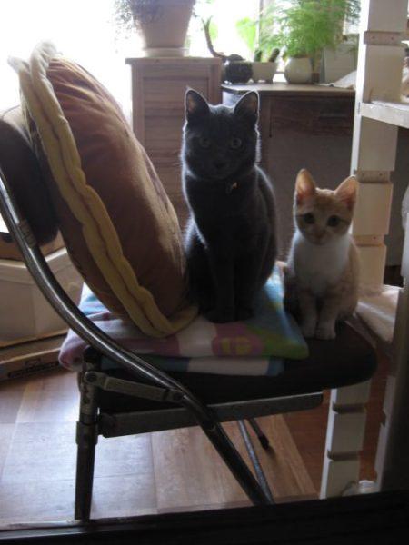 並んで座る灰色猫ししゃもと子猫だった頃の黄色猫きなこ