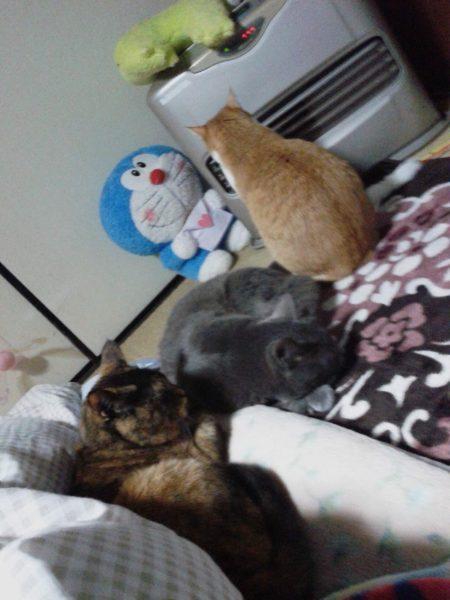 【PUZAP26日目】今日は猫の日o(^Ф∀Ф^)o
