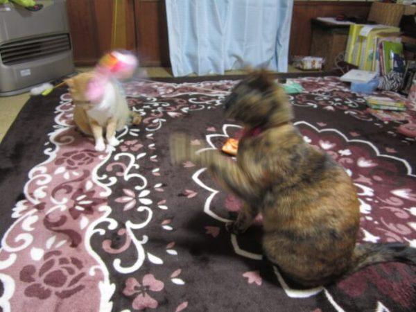 猫たちに新しいおもちゃのプレゼント