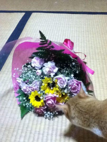 お花が大好き過ぎて食べようとする黄色猫きなこ
