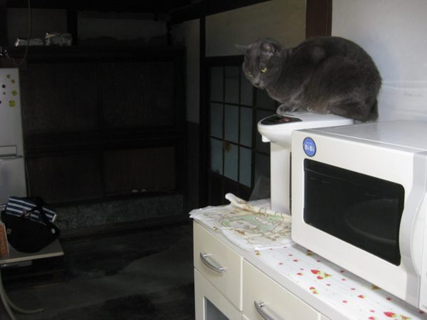 田舎の古民家暮らし。猫がいてくれて助かることo(^Ф∀Ф^)o【ネズミ、虫退治】