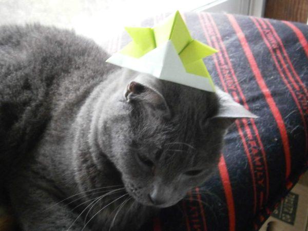 ひな祭り(*'▽')女の子(猫)たちに福山ローズを折り紙で折ってみた