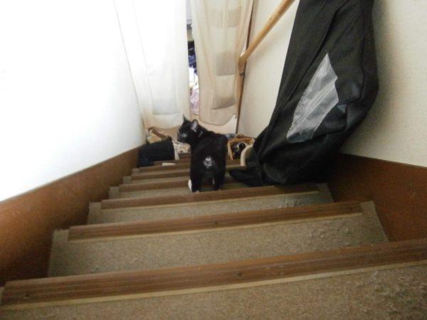 猫の去勢、避妊手術について、くつした猫とりもち