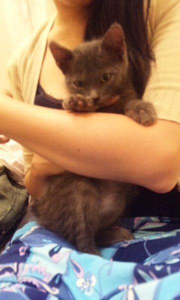 今日は灰色猫ししゃもの誕生日