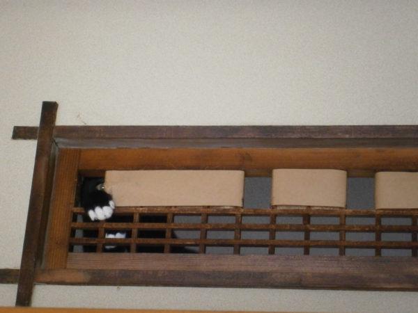 破壊魔とりもち【欄間を食い破るくつした仔猫】