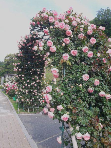 女子会してきました(^^)/【薔薇の写真もありますよ】