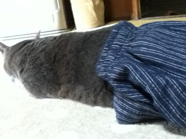 ズボンはいてるみたいな灰色猫ししゃも