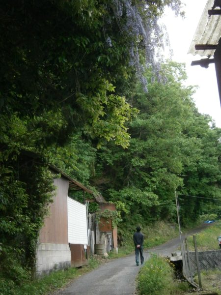 最近お気に入りの散歩道∩∀`∩【田舎の初夏