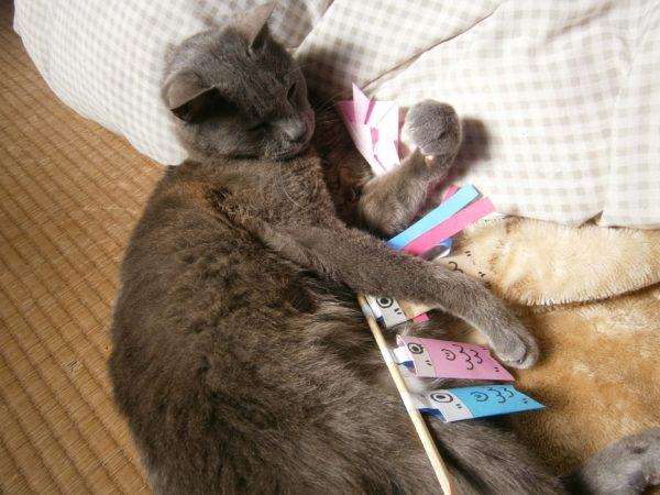 今日は子供の日(・∀・)灰色猫ししゃもの為にこいのぼり作ってみた
