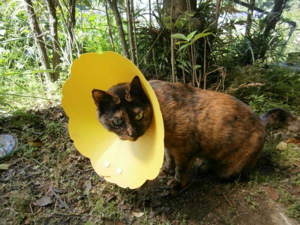 サビ猫の魅力を熱く語ってみる(・∀・)