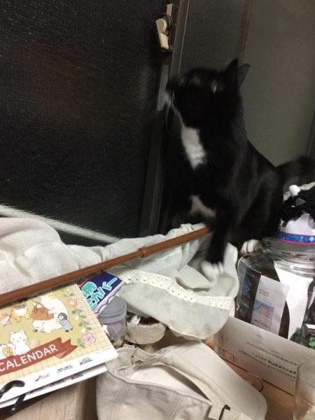 義弟猫とりもち。はじめてのヤモリとの遭遇(・∀・)