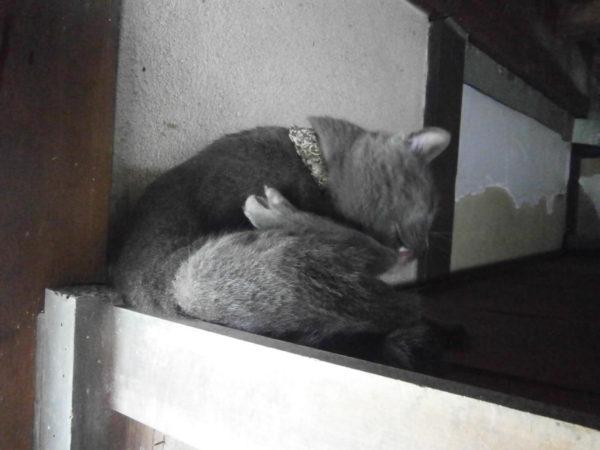 初夏。溶けてくる猫たち。灰色猫