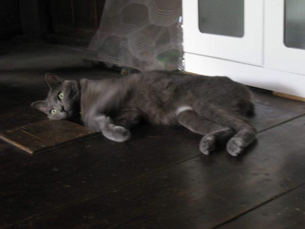 暑くて行き倒れつつ、何かを閃いた猫の画像
