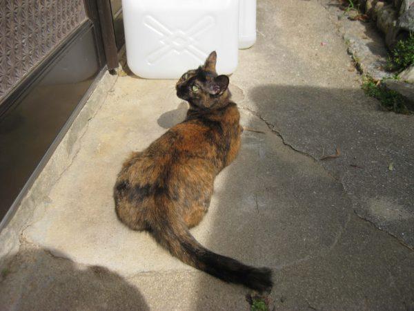 外で優雅にくつろぐさび猫