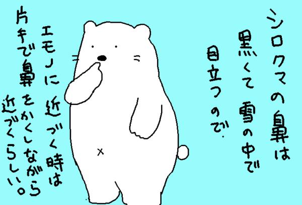 白熊の鼻は黒くて雪の中で目立つので、獲物に近づくときは鼻を隠しながら近づくらしい。