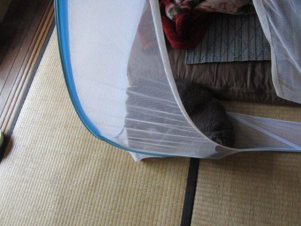 古民家に必要不可欠な蚊帳